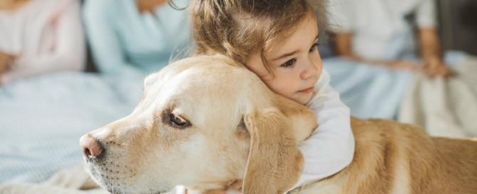 Las enfermedades y los accidentes, 8 de cada 10 asistencias de mascotas en verano