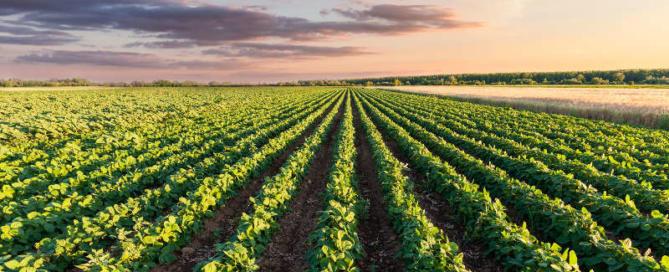 seguro agrícola AGRITASK